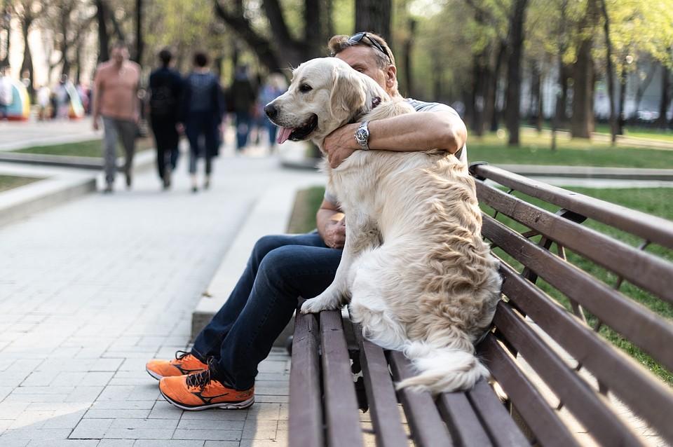 В Челябинске начали выгуливать чужих собак за деньги