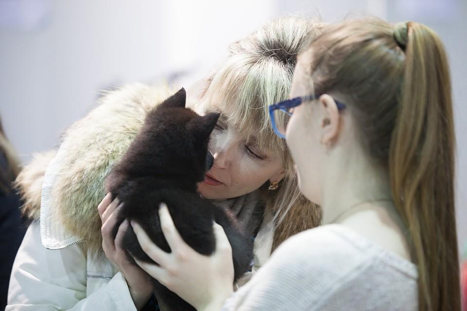 «Ваш любимец скоро умрет»: как в Челябинской области продают смертельно больных породистых щенков
